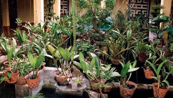 Vườn lan chùa Bửu Nghiêm Gia Lai