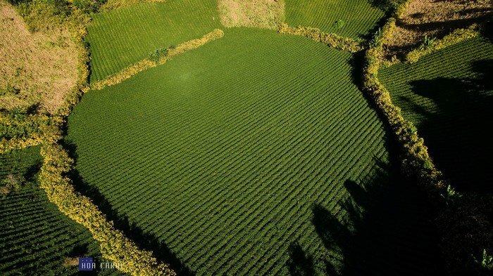 Bạn có mê mẩn sắc xanh tràn đầy sức sống ở vùng đất Chư Đăng Ya này không nào