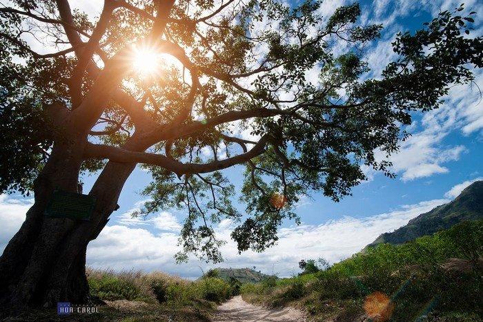 Phong cảnh đẹp nao lòng quanh núi lửa Chư Đăng Ya