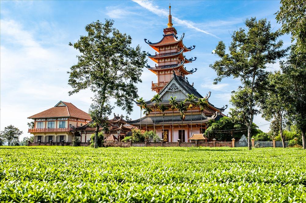 """Đến năm 1936, chùa được xây dựng lần đầu với tên gọi là """"Chùa Phật Học"""", sau đó ngôi chùa tiếp tục được trùng tu và chính thức mang tên là Bửu Minh từ năm 1961. Đến nay, những ngôi nhà cổ của công nhân đồn điền chè năm xưa chỉ còn lại trên đầu ngón tay nhưng cốt của ngôi chùa cũ vẫn còn và trong khuôn viên chùa đang giữ lại nhiều gốc trà với tuổi đời gần trăm năm. Ảnh: Chu Thế Dũng"""