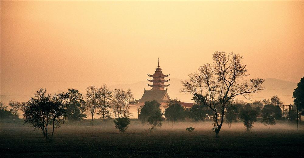 Dẫn lối vào chùa là hàng thông trăm tuổi quanh năm u tịch, nghiêng mình bên mái chùa thiêng. Ảnh: Quoc Nguyen