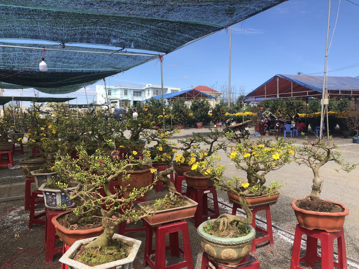 Dịch Covid-19 ở Gia Lai: Chợ hoa tết vắng lặng, chủ hàng mắc võng nằm cả ngày, nguy cơ thua lỗ nhãn tiền