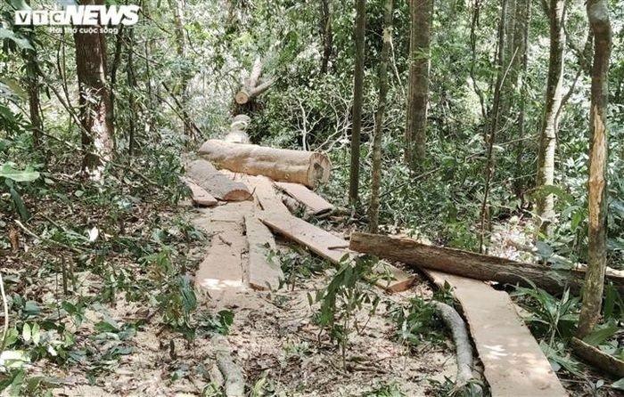 Cận cảnh rừng Mang Yang bị 'xẻ thịt' tan hoang tại Gia Lai