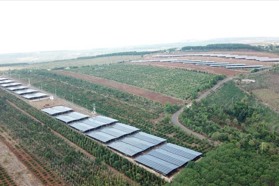 Gia Lai: 3/4 công trình điện mặt trời nghi núp bóng trang trại nông nghiệp